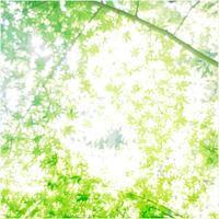 """p610 """" 桑の実 """" 松の川緑道    2017年5月21日 - 侘び寂び"""