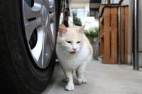 ハァ~ル - Black Cat Moan