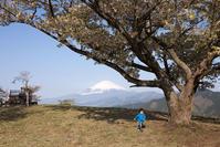 車で山頂まで登れる大眺望の山 大野山 - Full of LIFE