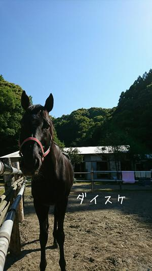 深海さん最終日 - 土佐黒潮牧場「牧場日記」