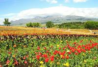 花の季節は山の上に - barbersanの野鳥観察
