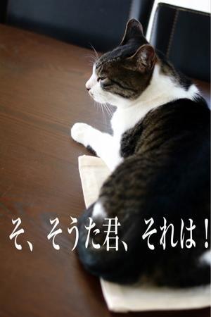 にゃんこ劇場「そうた君とティーマット」 - ゆきなそう  猫とガーデニングの日記