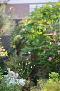 こーこだよ! - CHIROのお庭しごと