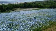 ♪海と砂丘の広大な世界★ひたち海浜公園② - MY FAVORITE SPACE