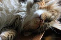 ネコにもヒトにも心配される - 猫花雑記
