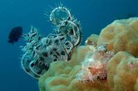 17.5.21 ダイビング日和、週末。 - 沖縄本島 島んちゅガイドの『ダイビング日誌』
