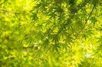 広元元子です - 言の葉の森