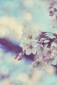 Sakura~Thank you all~ - 気の向くままに…