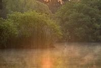 おてんとさんが あんたを… @ 水上池 - 東大寺が大好き