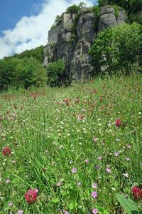 野の花彩る初夏の聖地、ラヴェルナ修道院 - ペルージャ発 なおこの絵日記 - Fotoblog da Perugia