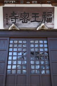 福王寺 枝垂れ桜 - photograph3