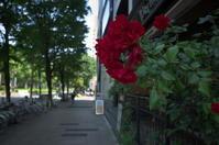 花咲く街角 170521 - LOOSE