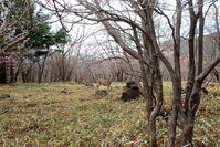 アカヤシオの中で鹿を見た - TOM'S Photo