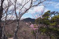 アカヤシオと袈裟丸山 - TOM'S Photo