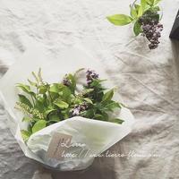 初夏の花々 - 木草花