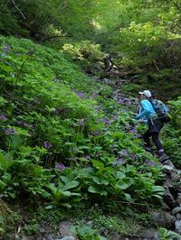カトラ谷のお花畑<その2> - Wakaba photos