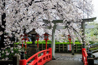 京都の桜2017 雨の六孫王神社にて - 花景色-K.W.C. PhotoBlog