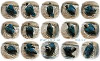 水浴びB.Bの記録 → (Tシャツがバスタオル~・5月9日) - FUNKY'S BLUE SKY