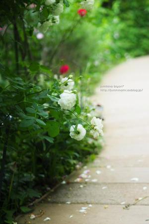 バラ咲く小径を - jumhina biyori*