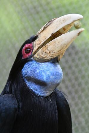 ルンルンルン - 動物園で写真撮影