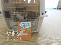 犬の本 【ウチの犬は、これでトイレ上手になりました。】 - yamatoのひとりごと