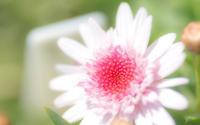élégance - Une fleur
