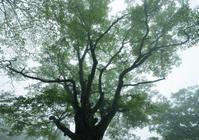 霧中を彷徨う - 源爺の写真館