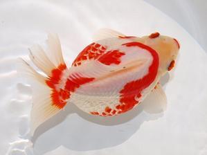 新入荷 5/21 - 大森町水族館