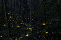 lights - HI KA RI
