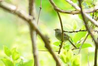 地球の森 - Bird-Watching Journal