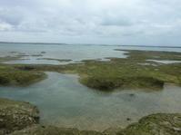 連休後初の大度海岸インリーフ散策 - 沖縄本島最南端・糸満の水中世界をご案内!「海の遊び処 なかゆくい」