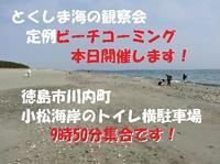 本日開催です! - 『とくしま海の観察会』 公式ブログ