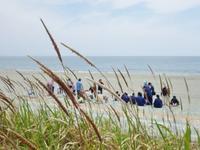 定例ビーチコーミング、無事に終了しました! - 『とくしま海の観察会』 公式ブログ