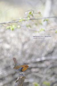 高原の谷に響く、、、 - healing-bird
