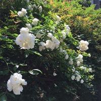 *+☆.*  ❀初夏の庭❀ ☆*.+* - オーガニックライフ