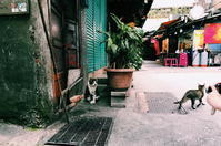 taiwan snap #50 - 台湾に行かなければ。