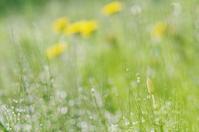 今朝の草むらw - ainosatoブログ02