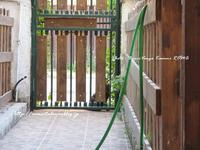 """""""我が家をのぞく猫@ビーチのにゃんこ♪ (=^ェ^=)②""""~ローマ近郊の小さな小さな海沿いの村から♪ 2017~ - ROMA  - PhotoBlog"""