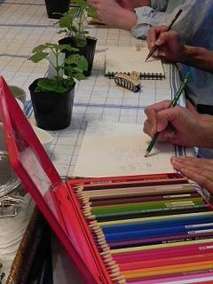 レモンバームを植えて、レモンバームドレッシングを作ります - 心とカラダが元気になるアロマ&ハーブガーデン教室chant rose