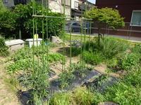 夏野菜の準備完了&ボカシ肥作り - 家庭サイエニストabuさん家の美味あれこれ