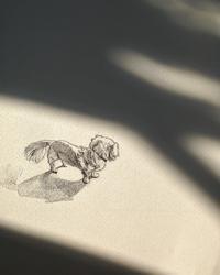 風の中。 - 犬の絵、描きます < Eyes of a Dog >