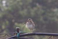 旅する鳥さん・・・・・・・ - カシャカシャblog