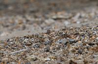 小千鳥 - いい男の「歩々是道場」