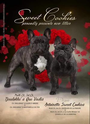フレンチブルドッグ エアコンの季節!! - THE ROYAL FAMILY         French bulldog breeder