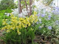 5月の裏庭 その2 - ユリ 百合 ゆり 魚沼農場の日々
