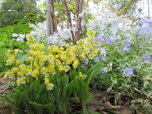 5月の裏庭その2 - ユリ百合ゆり魚沼農場の日々