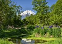 ドジョウ池 - 富士山に夢中