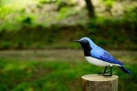 青い鳥・・・☀の朝   朽木小川・気象台より - 朽木小川・気象台より、高島市・針畑郷・くつきの季節便りを!