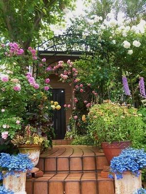 一年で一番華やかな庭を激写 - mr&mrs kajiの小さなバラの庭