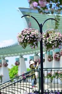 Garden Necklace YOKOHAMA 2017(11) - 今日の小さなシアワセ